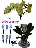 Automatische Bewässerung für Orchidee orchi-buddy von 6