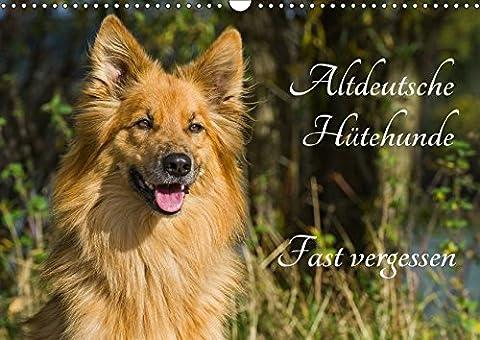 Altdeutsche Hütehunde - Fast vergessen (Wandkalender 2018 DIN A3 quer):