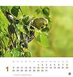 Freche Wellensittiche Postkartenkalender – Kalender 2017 - 2