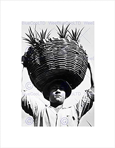 VINTAGE PORTRAIT FARM WORKER PINEAPPLE CROP BASKET USA FRAMED ART PRINT B12X3513