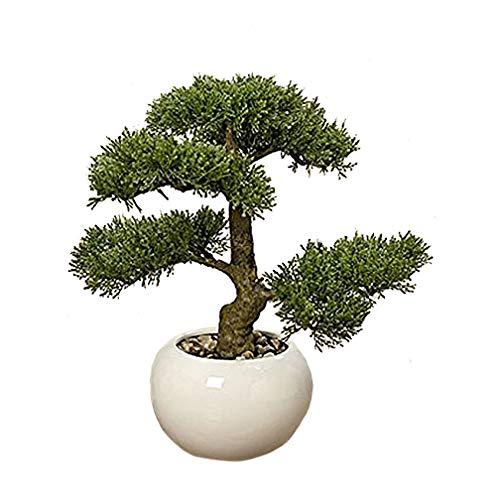 Unbekannt Bonsai im Topf H33cm (Zypresse)