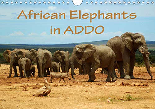 Addo Elephant National Park (African Elephants in ADDO (Wall Calendar 2020 DIN A4 Landscape): Beautiful photographs of wild elephants in the Addo National Elephant Park/South ... calendar, 14 pages ) (Calvendo Animals))