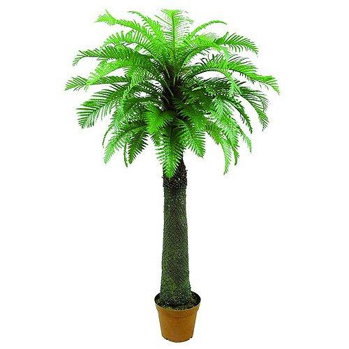 Euro Palms 82509150 Farnpalme, 180 cm