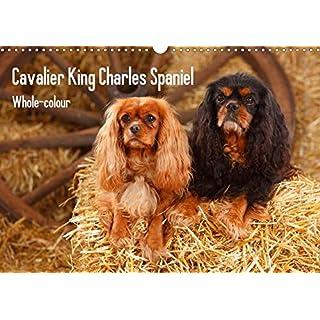 Whole-colour Cavalier King Charles Spaniel (Wandkalender 2020 DIN A3 quer): Cavalier King Charles Spaniel ausschließlich in den Farbschlägen ruby und ... (Monatskalender, 14 Seiten ) (CALVENDO Tiere)