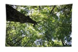 BAOQIN 60*80 Inches Unique Design Wonderful Prints Forest Tapestry, Summer Tree Canopy Green Leaves Branches Trunk Natural Ecology Growth Foliage Picture, Fabric Wall Hanging Decor for Bedroom Living