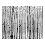 Bilderwelten Cortinas deslizables set - Birches In November - 5 Paneles japoneses, cortina...