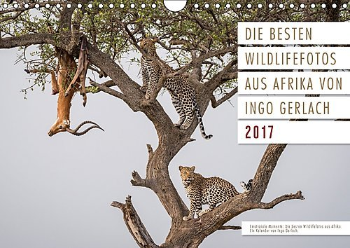 emotionale-momente-die-besten-wildlifefotos-aus-afrika-wandkalender-2017-din-a4-quer-ingo-gerlach-ha