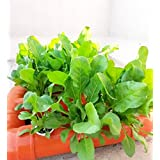 BEEJ HYDROPONICS Home Kit for Beginners - 9 Plants - Leafy Green Vegetables - Complete Bundle - Includes Starter Seeds (Orang