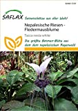 Exóticas Semillas–Fortuna–Murciélago flor de Nepal saflax [MHD 11/2018]