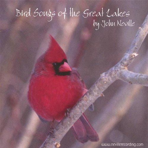 Red-Headed Woodpecker -