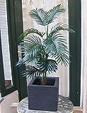 Licht & Grün exclusive Kunstpflanzen Künstliche Arekapalme ca. 1m hoch
