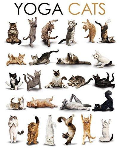 Cats Poster Yoga
