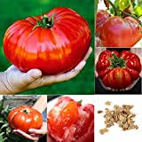 Portal Cool 1: Home Gardening Gemüse Obstpflanze Frische Große Tomatensamen Btl8 01