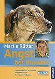 Angst bei Hunden: Unsicherheiten erkennen und verstehen Vertrauen aufbauen