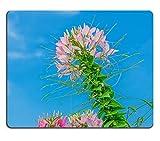 Luxlady Gaming Mousepad foto ID: 34465668, colore: bianco con fiori rosa e Spider Cleome hassleriana hassleriana in giardino