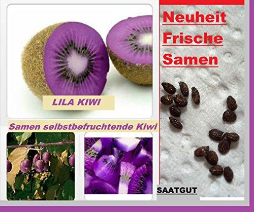25x Lila Kiwi Selbstbefruchtend Samen Saatgut Pflanze Frucht Rarität Obst Neuheit #141