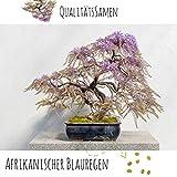 Exotische Bonsai Samen mit hoher Keimrate - Pflanzen Samen Set für deinen eigenen Bonsai Baum