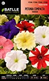 Semillas Batlle 096004BOLS - Petunia Compacta variada