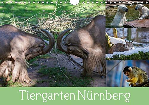 Tiergarten Nürnberg (Wandkalender 2020 DIN A4 quer)