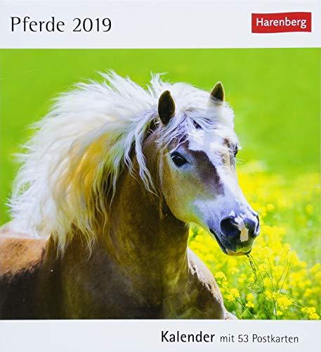 Pferde - Kalender 2019: Kalender mit 53 Postkarten