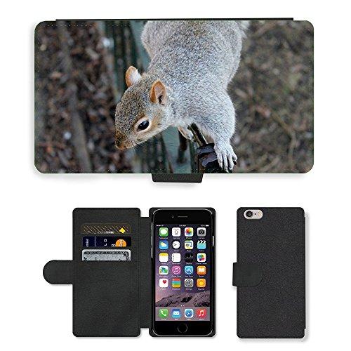 Just Mobile pour Hot Style Téléphone portable étui portefeuille en cuir PU avec fente pour carte//m00138209écureuil les écureuils Animaux Wildlife//Apple iPhone 6Plus 14cm