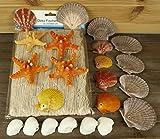 Deko Fischernetz ca. 2 x 4m beige mit 18 echten Muscheln und 4 Noppen-Seesternen