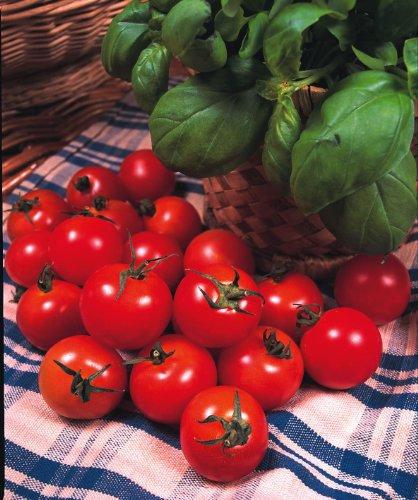 Just Seed Gemüse Tomate Gardeners Delight 50 Samen Wirtschaft Pack