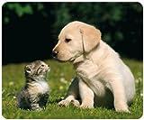 """'""""mejores amigos–Gato con perros de cachorro (Diseño 108) Animales de Mousepad + Postal:–Alfombrilla de ratón de alta calidad extremadamente reissfestem especial caucho con fuerte haftender parte inferior para un ajuste óptimo–Compatible para todos los tipos de ratón"""