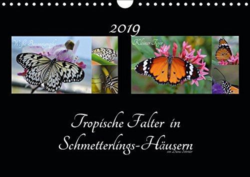 Tropische Falter in Schmetterlings-Häusern (Wandkalender 2019 DIN A4 quer): Das perfekte Geschenk für jeden Schmetterlings-Liebhaber. (Monatskalender, 14 Seiten ) (CALVENDO Tiere)