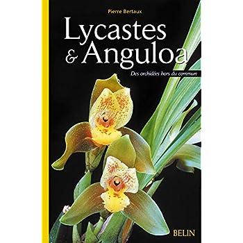 Lycastes et Anguloa : Des orchidées hors du commun