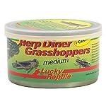 Lucky Reptile HDC-21 Herp Diner Grasshoppers, Medium 3