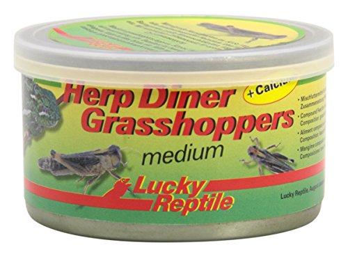 Lucky Reptile Herp Diner Grasshoppers mittel 35 g, 1er Pack (1 x 35 g)