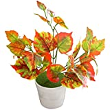 [Sponsored Products]TiedRibbons® Artficial Indoor Plants For Home | Artificial Plant For Decoration | Indoor Plants With Pot | Diwali Home Decoration Items