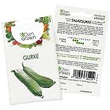 OwnGrown Premium Salat Gurken Samen (Cucumis sativus), Salatgurke Samen zum Anbauen, Sorte Chinese Slangen, Gurken Saatgut für rund 30 Gurken Pflanzen