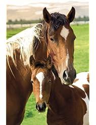 Empire 393968 - Póster de caballo y potro (61 x 91,5 cm)