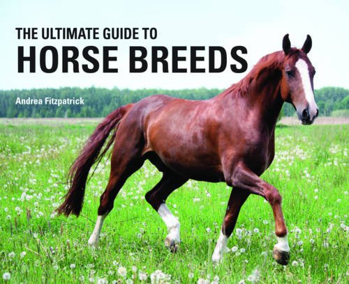 the-ultimate-guide-to-horse-breeds