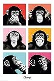 Poster The Chimp - pop - Größe 61 x 91,5 cm - Maxiposter