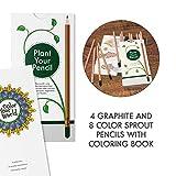 Sprout Pack de lápices de colores para niños | caja de 12 | lápices para colorear y dibujar de madera natural | producto ecológico | lápices plantables | libro para colorear incluido | Travel Edition