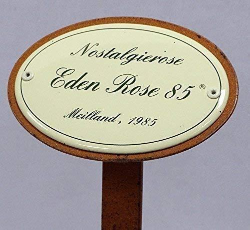 Rosenschild Emaille, Nostalgierose, Eden Rose 85, Meilland 1985