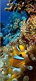 AG Design Fototapete FTNv2865 Photomurals Korallenriff