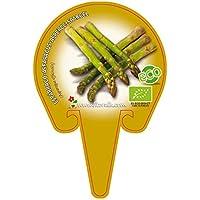 Plantón ecológico de Espárrago maceta 10,5 cm de diámetro