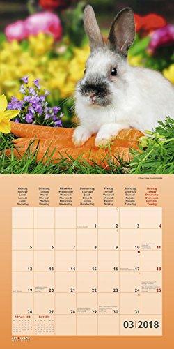 Kaninchen 2018 – Tierkalender, Kaninchen-Kalender, Hasenkalender, Haustierkalender  –  30 x 30 cm - 4