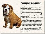 Blechschild / Warnschild / Türschild - Aluminium - 15x20cm - - 'Hunderegeln' - Motiv: Englische Bulldogge -- 01