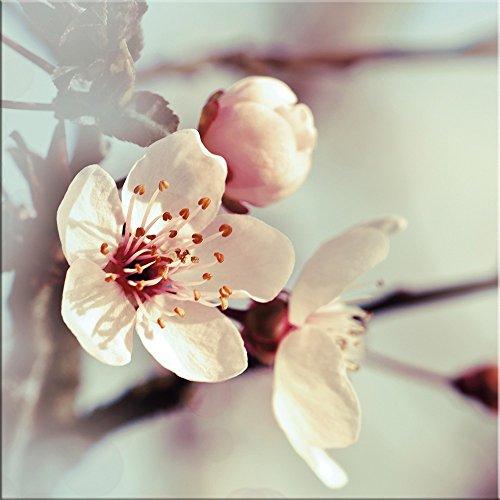 artissimo, Glasbild, 30x30cm, AG2089A, Kirschblüten I, Kirschbaum, Blumen-Bild, Bild aus Glas, Moderne Wanddekoration aus Glas, Wandbild Wohnzimmer modern