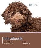 Labradoodle (Dog Expert)