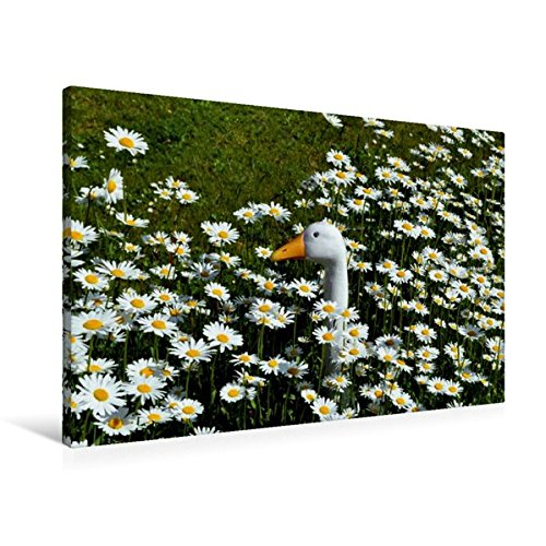 Premium Textil-Leinwand 90 cm x 60 cm quer, Der Vergleich | Wandbild, Bild auf Keilrahmen, Fertigbild auf echter Leinwand, Leinwanddruck (CALVENDO Glaube)