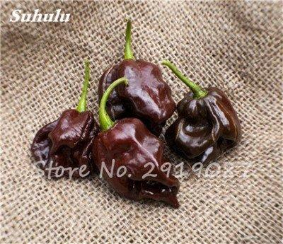 Scotch Bonnet Pepper Samen (Beförderung ! 200 Stück Schokolade Scotch Bonnet Hot Riesen Pepper Samen Gewürze Spicy Chili Bio-Gemüse No-Gmo für Garten Werk 2)