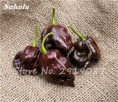 Pepper Scotch Samen Bonnet (Beförderung ! 200 Stück Schokolade Scotch Bonnet Hot Riesen Pepper Samen Gewürze Spicy Chili Bio-Gemüse No-Gmo für Garten Werk 2)