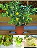 Portal Cool 20Pcs / Bag Kaffernlimette Samen, Kalk Samen, (Citrus Aurantifolia), Bio-Obst Se