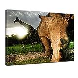 Kunstdruck - Nashorn und Giraffe - 70x50 cm 1 teilig - Bilder als Leinwanddruck - Wandbild von Bilderdepot24 - Tierwelten - exotische Tiere - afrikanische Tiere im Sonnenuntergang